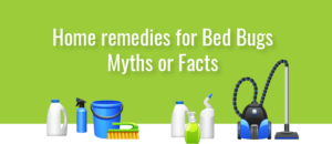 Home remedies for Bed bugs - Myths or Facts