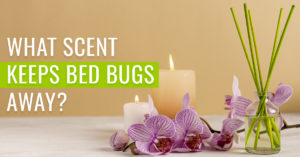 What scent keeps bed bugs away?