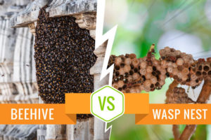 Beehive vs Wasp Nest