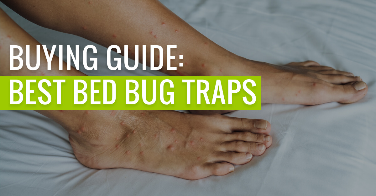 Best Bed Bug Traps featured image