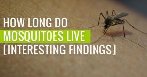 How long do Mosquitoes live for?