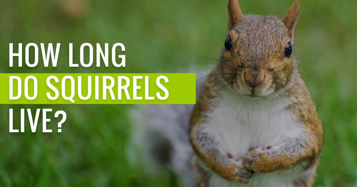How long do Squirrels live for?